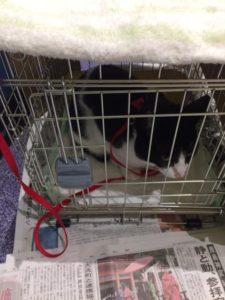 猫のポテトも同行避難で一緒に避難しました。